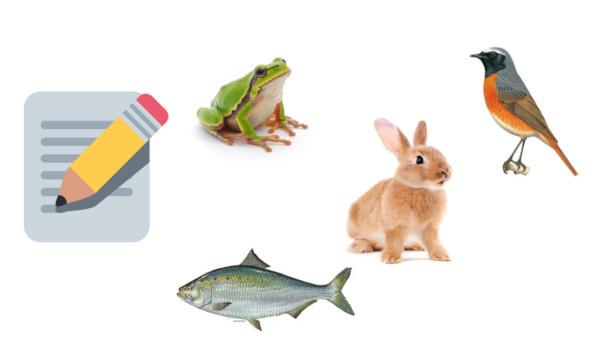Gioca e Impara – Conosci gli Animali
