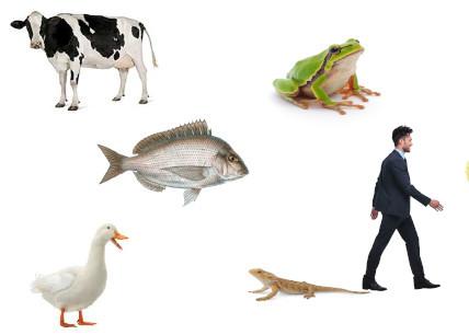 Gli Animali Vertebrati